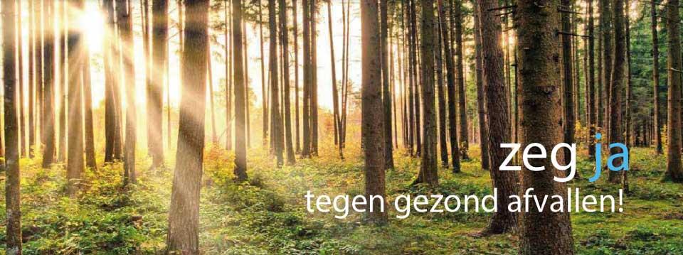 bomen_bos_zon_crop_met_text