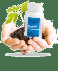 phen-plant1