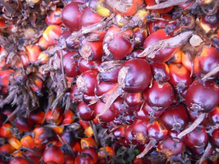 Wat is rode palmolie en wat heb je eraan?